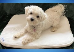 BAGPAD - Antibakterielle Auflage für Hunde